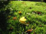 Autumn in Warsaw 5