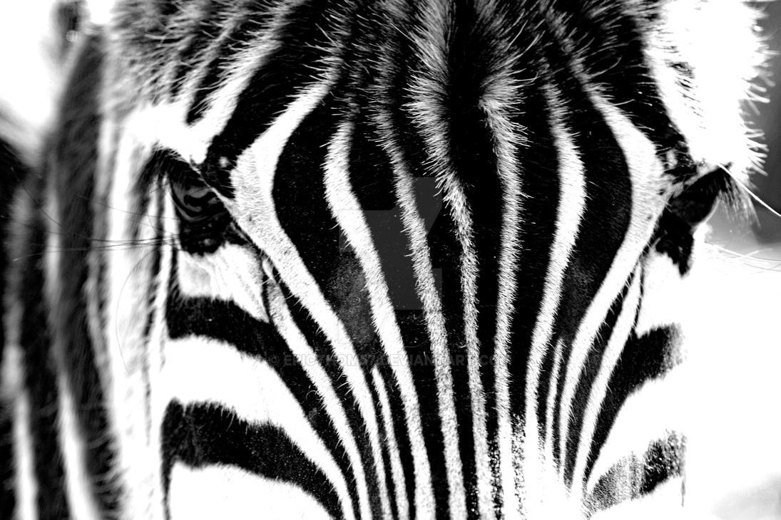 Zebra Eyes by ericthom57