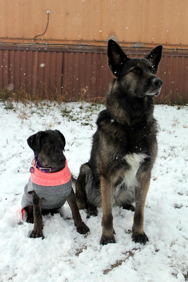 Snow dogs by katasu1