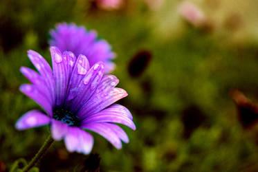 flower by umutakar