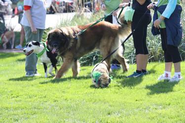 2015 MSPCA DOG WALK 2