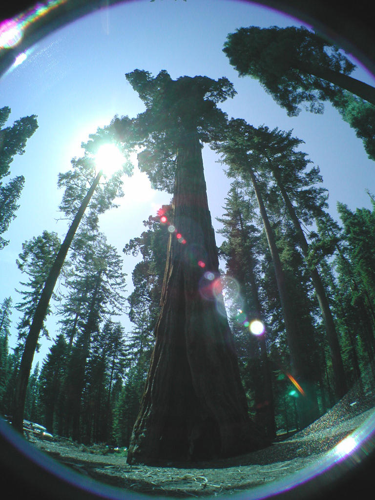 oh those trees by peacefrogo0o0o