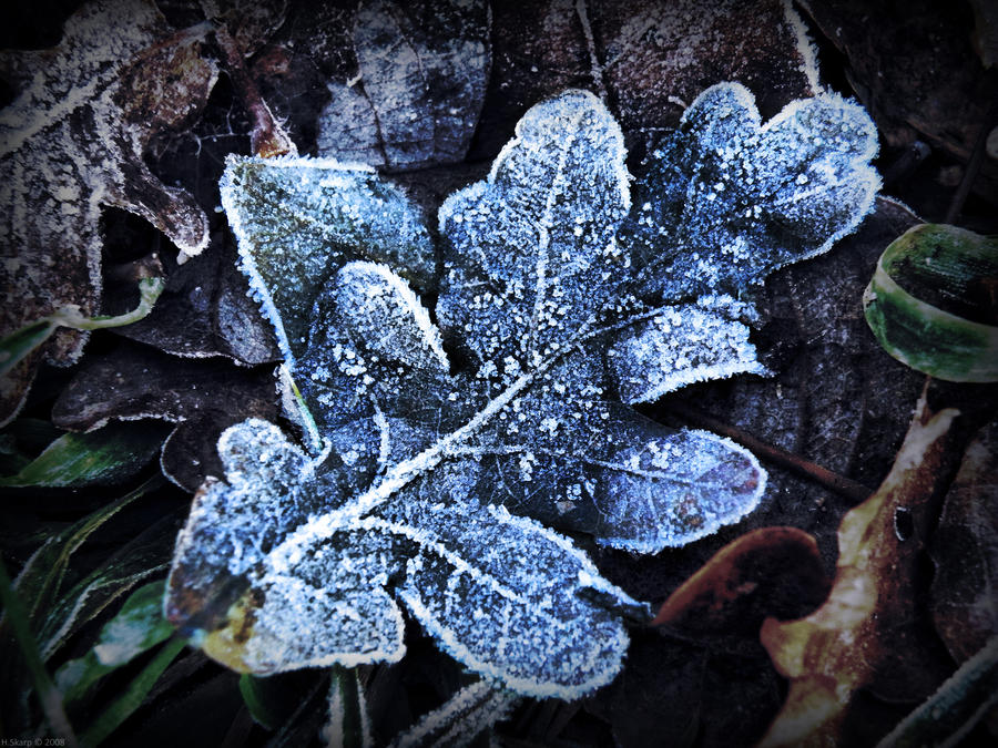 Frost by HAL-2oo6