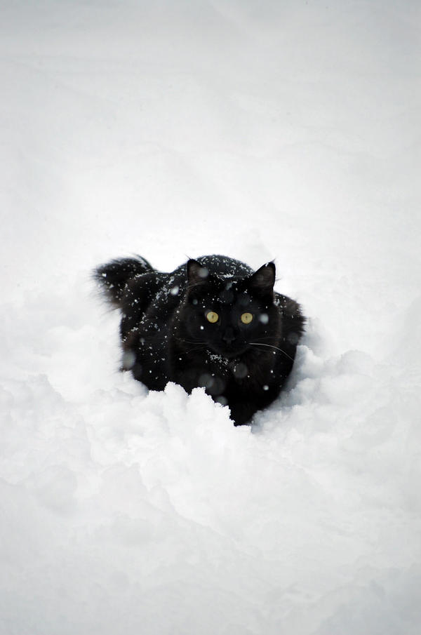 Snow Bunny II by ZillaJezebel