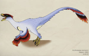 086--ORNITHOLESTES HERMANNI by Green-Mamba