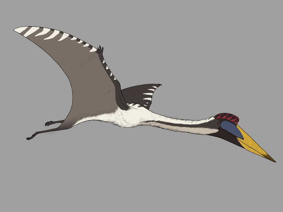 Quetzalcoatlus scale