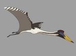 SMM01--Quetzalcoatlus sp