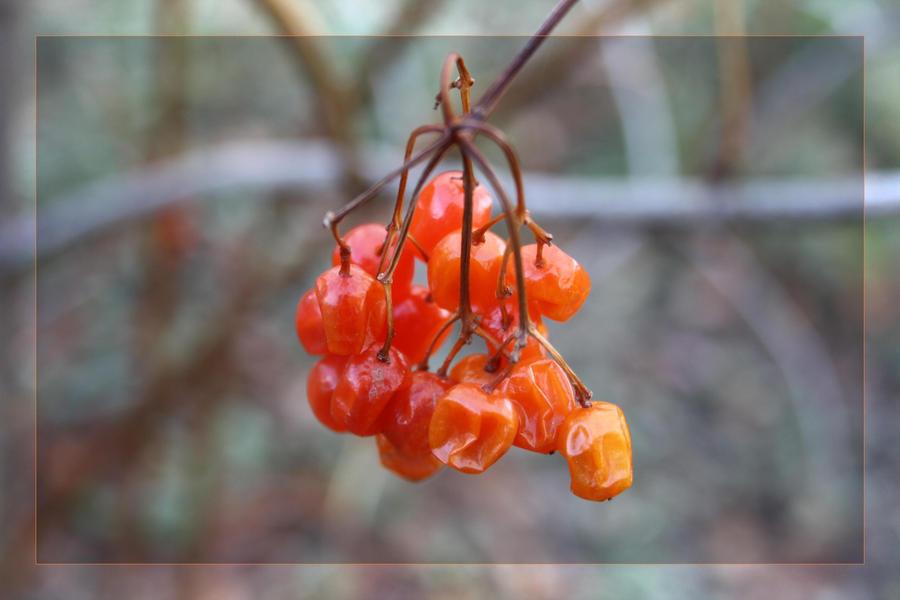 autumn 3 by LenaSt63
