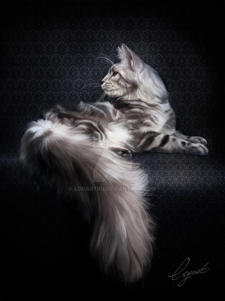 Maine Coon by LogartRU