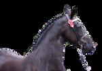 Pre-Cut Horse