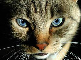 Human in Cat