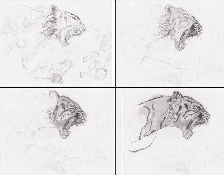 Drawing tigerstep by step by drawinforfun