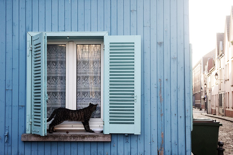 Blue and the Cat by Ajzatsana