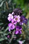Good Flowers I