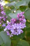 Good Flowers III