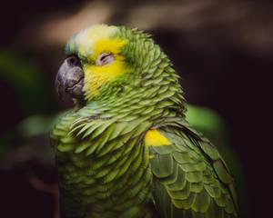 Mah Bird II