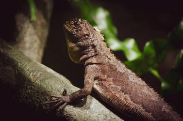 Small Lizard, Big World