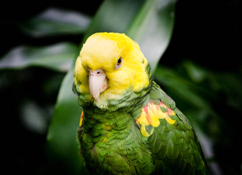 Serious Bird
