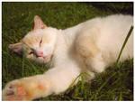 Lazy Marshmallow