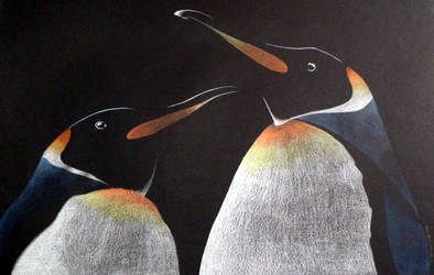Penguins by TimBaldwin