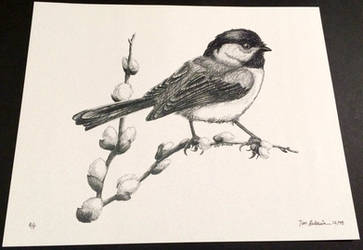 Chickadee 1 by TimBaldwin