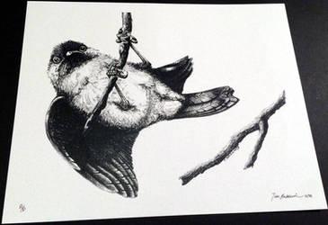 Chickadee 2 by TimBaldwin