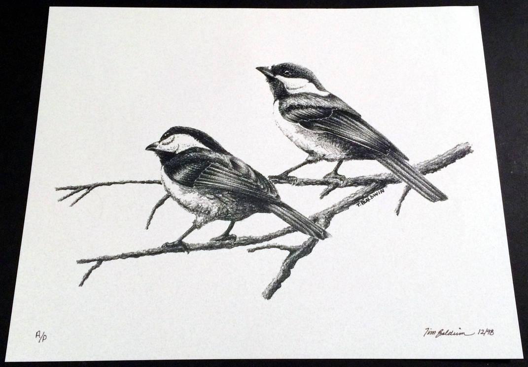 Chickadee 3 by TimBaldwin