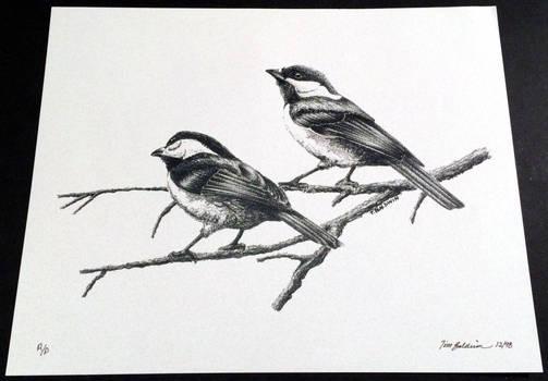 Chickadee 3