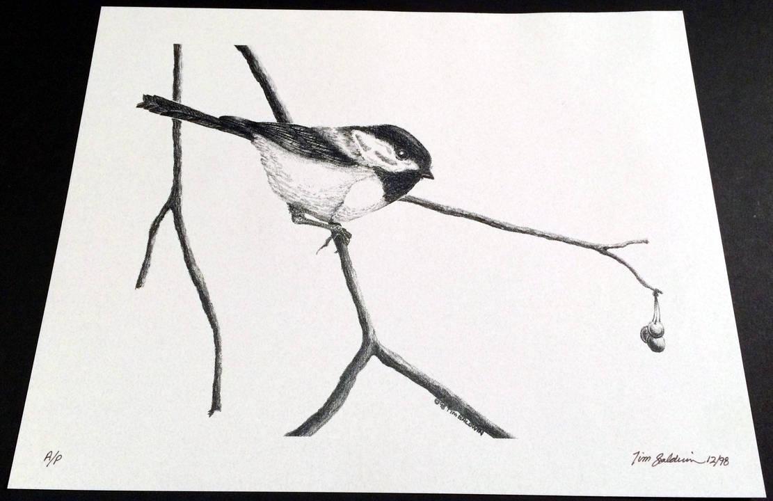 Chickadee 4 by TimBaldwin
