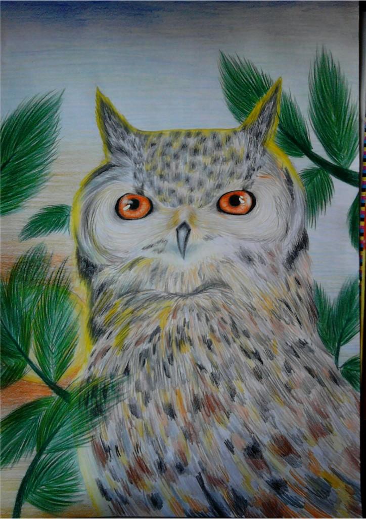 domina owl visavajara freiburg