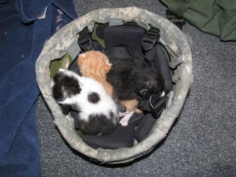 Kittens in my Kevlar by phdmatt2002