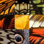 Butterfly Tiled Wings