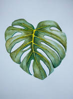 . . . Monstera . . . by ChIandra4U