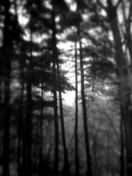 snow pines - depth