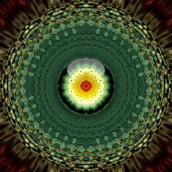 solstice flower