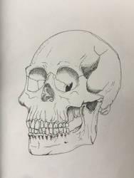 Skull by Irish-Hellion