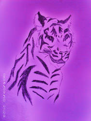 purple tiger by wolf44luver