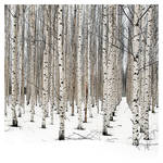 the Essence of winter