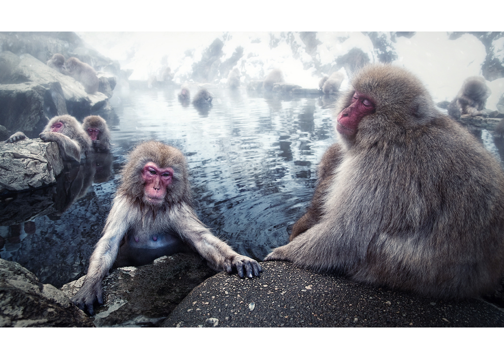 Challenge 3 - Monkeys by wchild