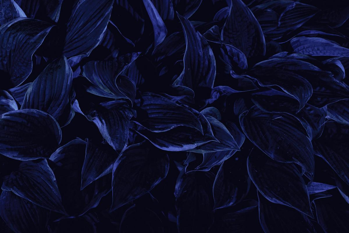 Dark Blue Tumbl...