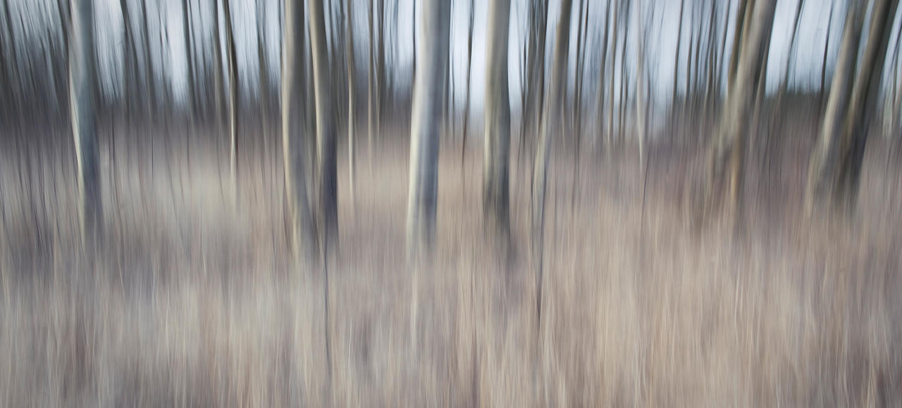 Cold November Forest by wchild