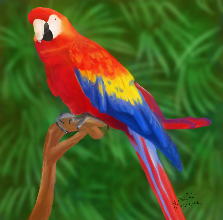 Rainbow parrot by bunnyfroofroo on deviantart for Rainbow parrot fish