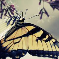 Flutterings by Xandriia1