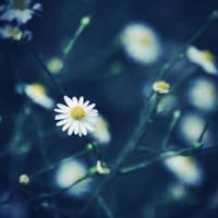 Summer's End by Xandriia1