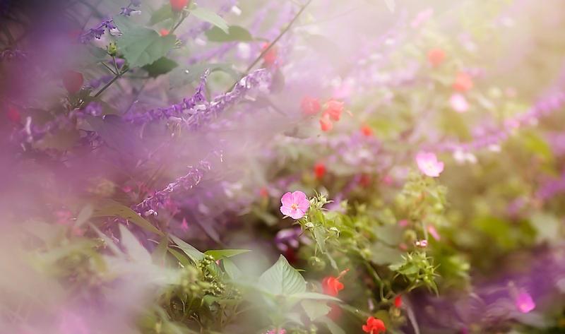 Bloom by Xandriia1
