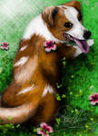 Sweet Dog O'Mine... by RosAlba97