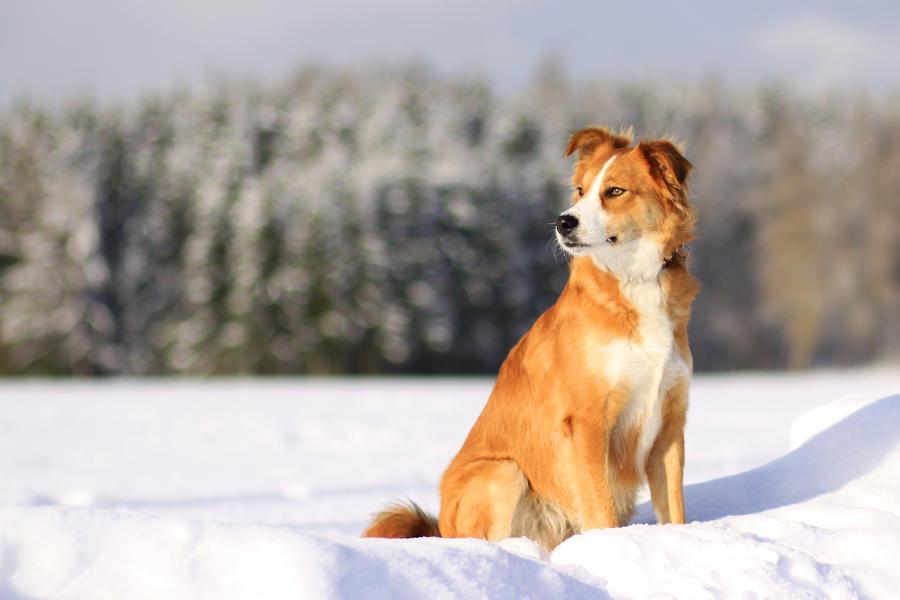 Remembering last winter... by Fiorildi