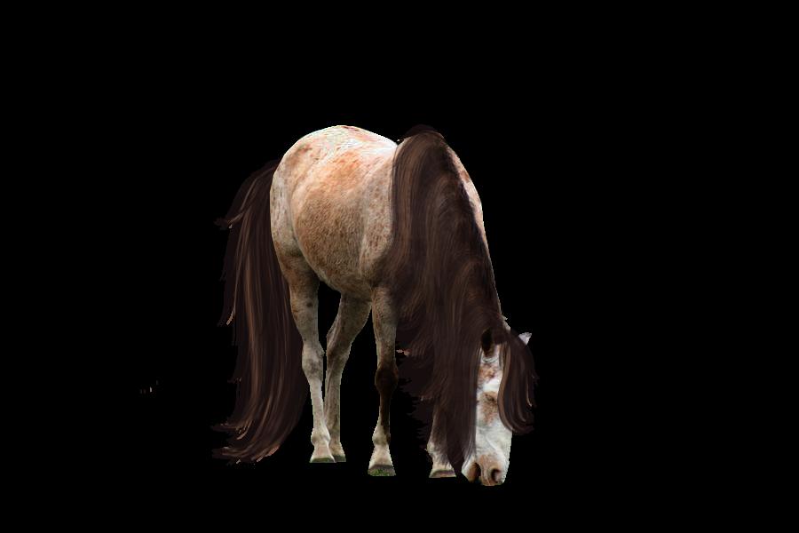 صور احصنه بدون خلفيه png سكرابز حصان png صور احصنه precut_roan_by_looserfaceman-d5dbaa2.png