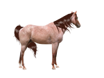 Red Roan Precut w mane and tail