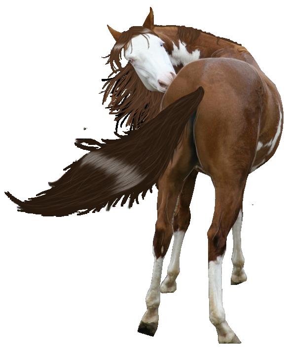 صور احصنه بدون خلفيه png سكرابز حصان png صور احصنه painted_horse_precut_by_looserfaceman-d5sag96.png